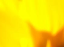 leuchtend_gelb
